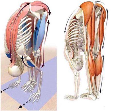 spine aligner - lauro group - flessione caviglia anca colonna vertebrale